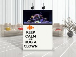 Keep calm and hug a clown - Amazing Sticker For Every Marine Fish Lover