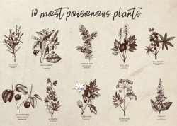Most Poisonous Plants Stylish Retro Style Poster