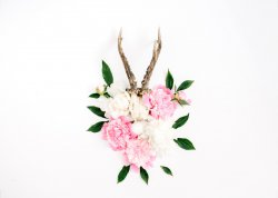 Goat Horns and Peonies Stylish Poster