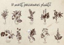 Most Poisonous Plants Stylish Retro Style Poster