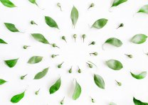 Cirlcle of Leafs - Minimalistic Nature Poster Design - Balance Style